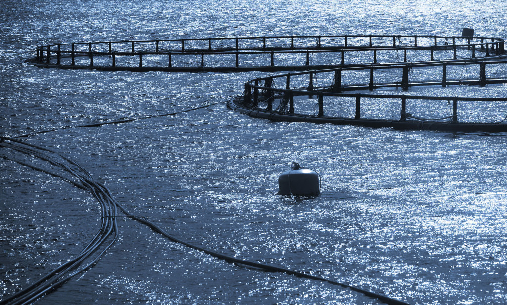 Round cages of fish farm for salmon growing