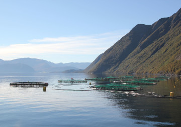 Fish farming area